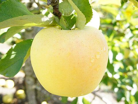 りんご・シナノゴールド