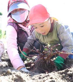 園児に農業の楽しさを伝える