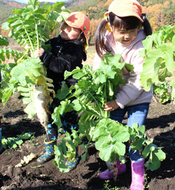 園児たちがダイコンを収穫 大きく育った姿に歓声!
