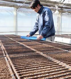 育苗センターでは種作業スタート 春作レタスの準備すすむ