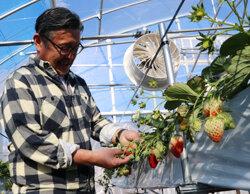 冬場の仕事づくりで通年雇用を実現 ブドウ栽培のパート職員定着へ