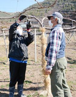 ブドウ栽培で農福連携 農福連携の普及をめざして