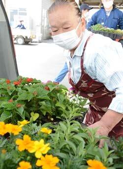 畜産女性部「あおぞらの会」花苗配付 畜舎に花を飾ろう!