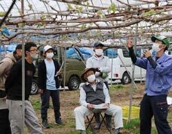 ぶどう芽かき講習会 松本市農業農村支援センターと連携 さらなるブランド強化へ
