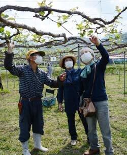 ぶどうオーナー園が開園 農家の苦労と収穫の喜びを体験