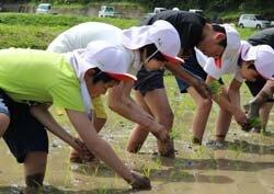 山辺小学校の児童が田植え体験 育てる喜びを伝える