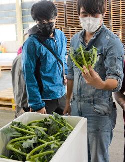 野菜部会が洋菜類の目揃会を開催 目揃で出荷規格の統一を