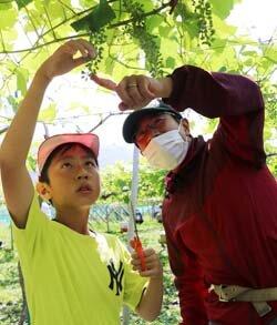 青年部員が小学生にブドウ栽培を指導 地元特産の味を知ってほしい!