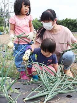 青年部塩尻支部が「玉ねぎ収穫まつり」を初開催 家族で収穫を楽しむ