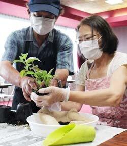 若妻大学OG会芳川支部で交流会を開催 苔玉作りで親睦深める