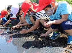 宗賀小学校で大豆の種まきを指導 大きく育つよう願いを込めて