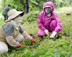 地域住民が桜林を整備 地域の景観を守りたい