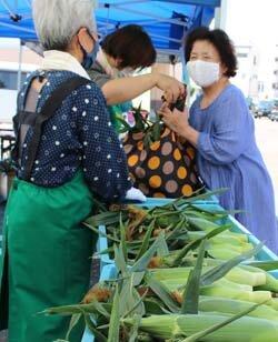 「勇気野菜館」で「もろこしまつり」を開催 朝採りの新鮮なトウモロコシをお届け