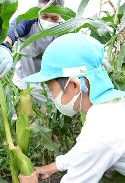 島立支所協同活動、夢中になって収穫