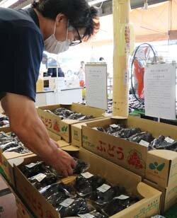 農産物直売所で「親子房」販売 農家所得の向上・JA利用の促進へ