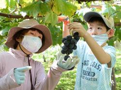 収穫体験を実施 待望の収穫に歓声