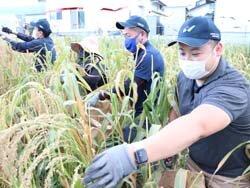 女性部波田支部がキビを収穫 JA役職員との交流の場として定着へ