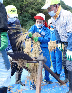 児童が昔ながらの脱穀作業を体験 農家の苦労・食の大切さを学ぶ